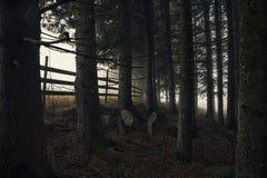 与雾的一个黑暗的森林场面 免版税图库摄影