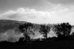 与雾的树在他们后在一个明亮的冬日 库存图片