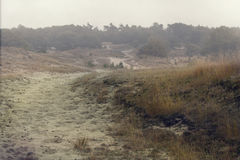 与雾的石南花 库存照片