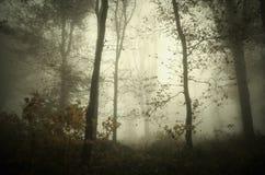 与雾的神奇万圣夜森林场面 免版税库存图片
