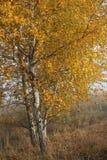 与雾的秋天横向 立陶宛 库存图片