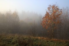与雾的秋天横向 立陶宛 库存照片