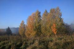 与雾的秋天横向 立陶宛 图库摄影