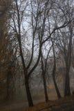 与雾的秋天横向 立陶宛 免版税库存照片