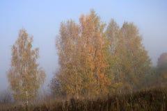 与雾的秋天横向 立陶宛 免版税库存图片
