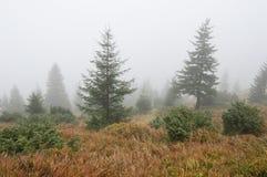 与雾的秋天横向 免版税库存照片