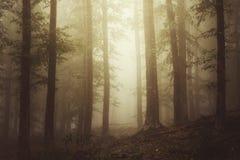 与雾的飘渺森林场面 免版税库存图片