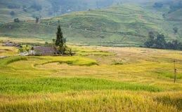 与雾的绿色和黄色米大阳台在Sa Pa的山, vi 免版税库存图片
