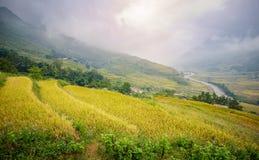 与雾的绿色和黄色米大阳台在Sa Pa的山, vi 库存照片