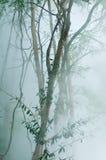 与雾的绿色树在温泉 免版税库存照片
