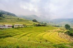 与雾的绿色米大阳台在Sa Pa的山,越南 库存照片