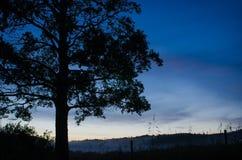 与雾辗压的树剪影在2 库存照片