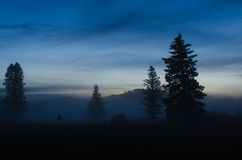 与雾辗压的树剪影 库存图片