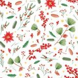 与霍莉叶子的圣诞节无缝的样式、一品红和槲寄生植物、杉木锥体和分支在白色 库存例证