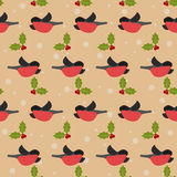 与霍莉红腹灰雀和分支的冬天欢乐样式在t的 库存照片