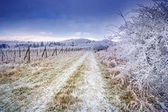 与霜和积雪的树的冬天喀尔巴阡山脉的风景和本质在布拉索夫,斯洛伐克附近的 库存照片