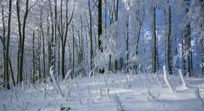 与霜和积雪的树的冬天喀尔巴阡山脉的风景和本质在布拉索夫,斯洛伐克附近的 免版税图库摄影