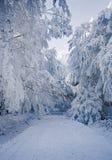 与霜和积雪的树的冬天喀尔巴阡山脉的风景和本质在布拉索夫,斯洛伐克附近的 图库摄影