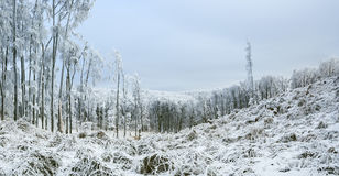 与霜和积雪的树的冬天喀尔巴阡山脉的风景和本质在Pezinok,斯洛伐克附近的 免版税图库摄影