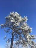 与霜和蓝天的冬天树 免版税库存照片