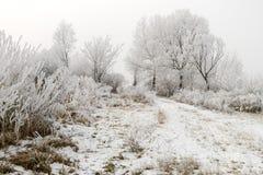 与霜和雾的冬天风景 库存图片