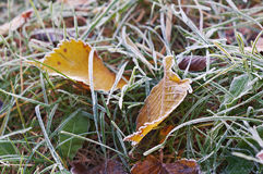 与霜打扫灰尘的秋叶 免版税图库摄影