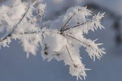 与霜水晶的美丽的特写镜头在植物冬天早晨 免版税库存照片