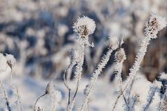 与霜水晶的美丽的特写镜头在植物冬天早晨 库存照片
