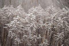 与霜水晶的美丽的特写镜头在植物秋天早晨 免版税图库摄影