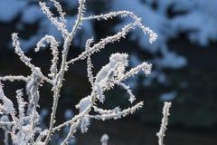 与霜水晶的美丽的特写镜头在植物秋天早晨 免版税库存照片