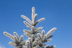 与霜的云杉的分支在蓝天背景 圣诞节我的投资组合结构树向量版本 免版税图库摄影