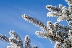 与霜的云杉的分支在蓝天背景 圣诞节我的投资组合结构树向量版本 库存图片