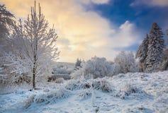 与霜的冬天风景和积雪的树本质上喀尔巴阡山脉的在布拉索夫,斯洛伐克附近的 图库摄影