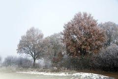 与霜的冬天风景在树和灌木在领域在a 免版税库存照片