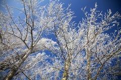与霜的冻结冬天结构树在分行 库存图片