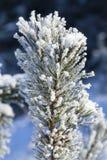 与霜的树 免版税库存照片