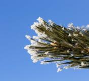 与霜的树 库存照片