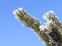 与霜的结构树 免版税库存照片