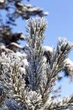 与霜的结构树 库存图片