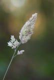 与霜的草 库存图片