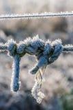 与霜的结,被拍摄在冷淡的夜以后 库存图片