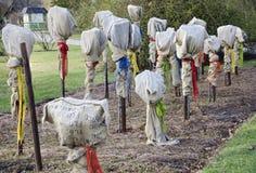 与霜冻保护的罗斯树 免版税库存图片