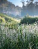 与露水的湿草与迷离山和绿草领域的早晨在背景中 选择聚焦 库存图片