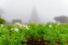 与露水的白花在薄雾的庭院里在早晨后面的 免版税库存照片