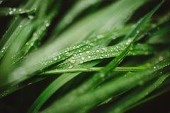 与露滴的新鲜的厚实的草 库存照片