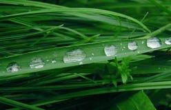 与露滴和蓝色bokeh的绿草 在草的早晨露水 被弄脏的背景 免版税库存照片