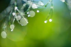 与露滴的抽象构成在莳萝植物 免版税库存照片