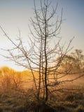 与露滴的树在日出天空的背景 免版税库存图片