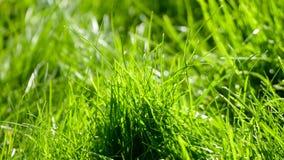 与露水的草 免版税库存图片