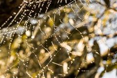 与露水的蜘蛛网在阳光下 免版税库存照片